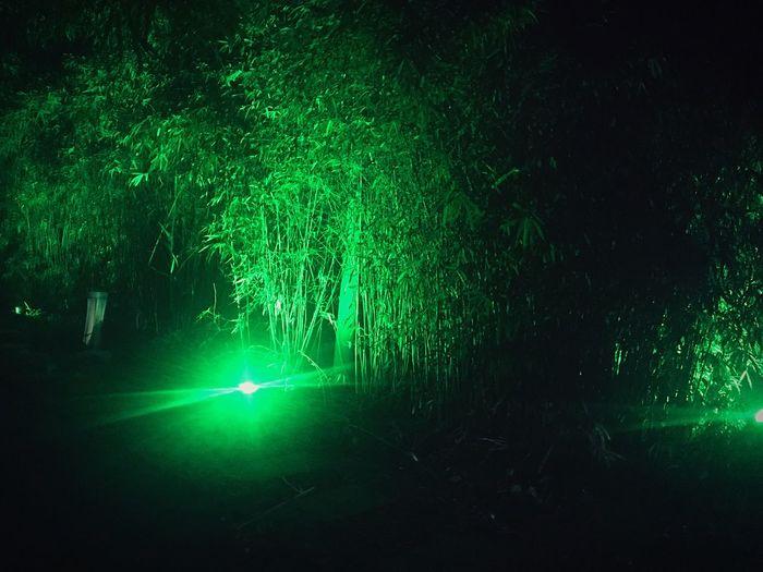 Green Color Night Illuminated Light Beam Growth No People Outdoors Tree Nature