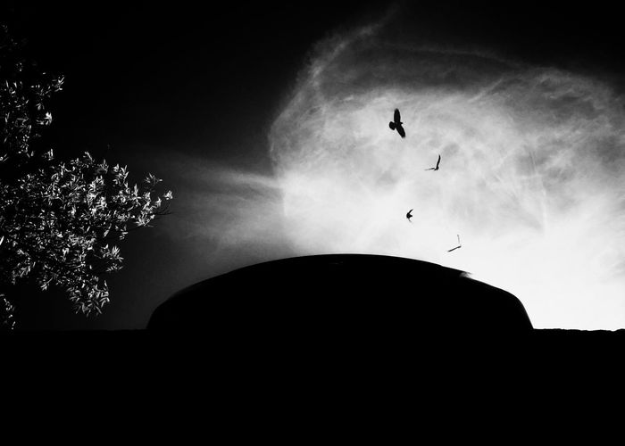 Flying Mid-air Silhouette Sky Outdoors Bird Animal Themes Perspectives On Nature Tree Black And White Friday