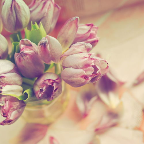 Soft Light Tulips Beauty In Nature Bokeh Botany Bouquet Close-up Flower Flower Arrangement Flower Collection Flower Head Flowering Plant Flowers Freshness Indoors  Petal Plant Tulips Flowers Warm Light
