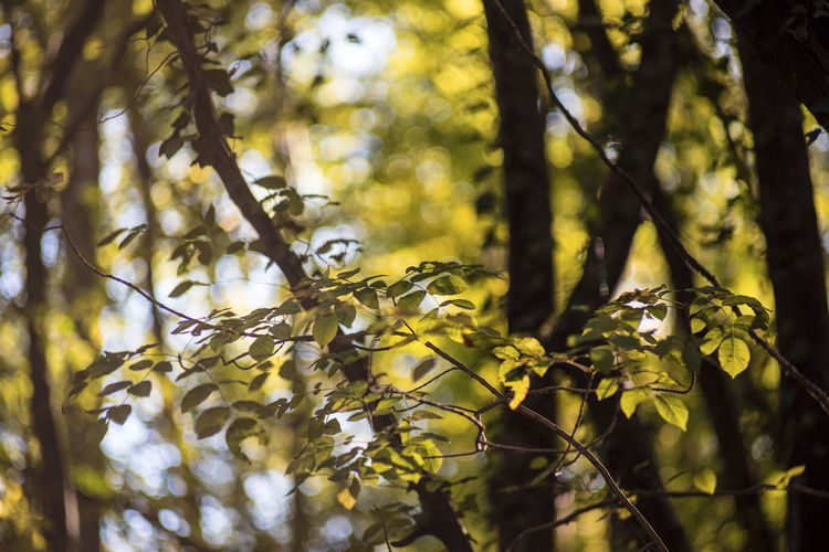 Low angle view of leaves on tree in forest