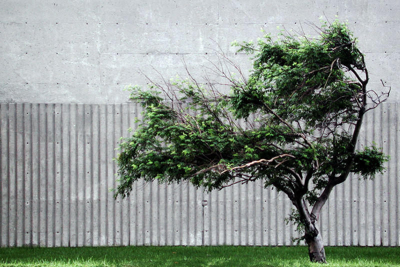 Architecture Barrier Boundary Building Exterior Built Structure City Day Fence Front Or Back Yard Grass Green Color Growth Leaf Nature No People Outdoors Plant Plant Part Tree Wall - Building Feature