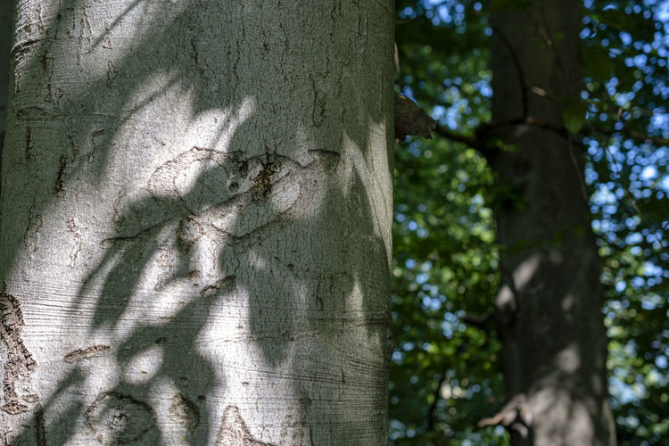 Love Nature Tree Shadow Sunlight Day Bark Outdoors Heart Forest Tranquility Pattern Emotion Plant Land Tree Trunk Growth Heart Shape Close-up Textured  Trunk No People Green Color Focus On Foreground Arrow Heart ❤