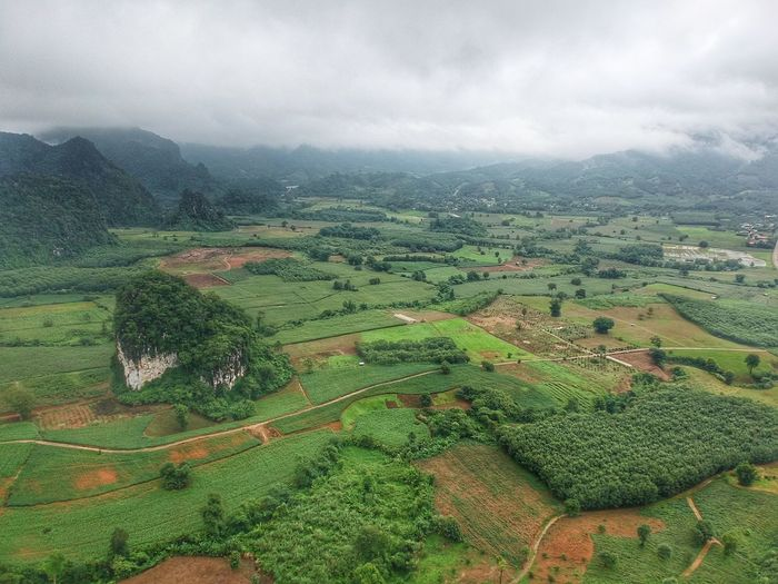 Thailand Top View Drone  Droneshot Cloud Cloud - Sky Mountain Geen Mountain Nature Photography Skyscraper Clouds And Sky Nature Landscape People Drone Moments Dronephotography Tea Crop Tree Rural Scene Terraced Field Agriculture Field Crop  Rice Paddy Farm Sky