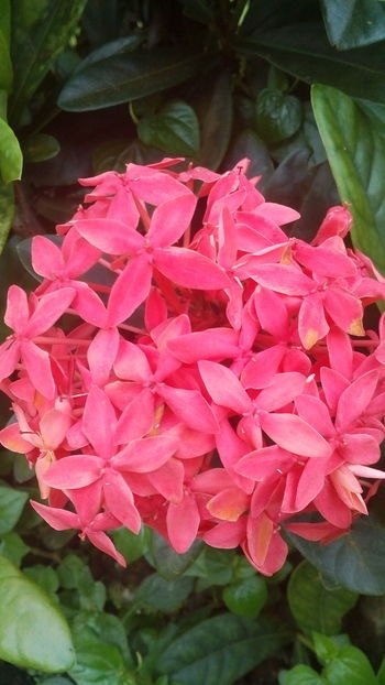 Pink Color Flower Petal Beauty In Nature Nature Plant Growth Fragility No People Freshness Day Flower Head Outdoors Close-up Blooming
