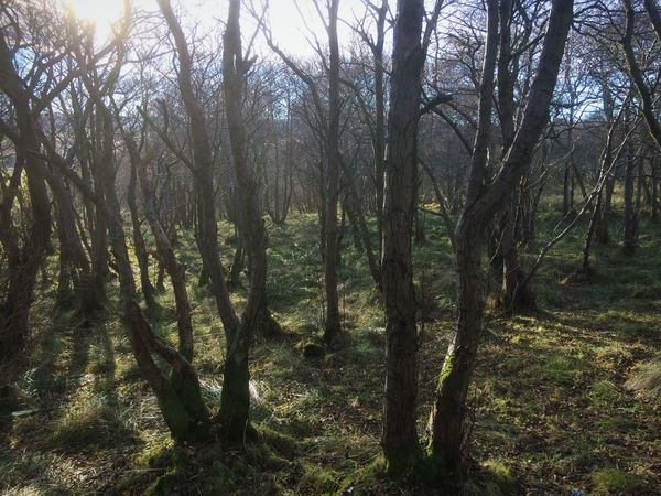 Backgrounds Beauty In Nature Day Forest Growth Landscape Lush - Description Nature No People Outdoors Scenics Scotland Sky Tranquil Scene Tranquility Tree Trunks TwistedWood Wildwood