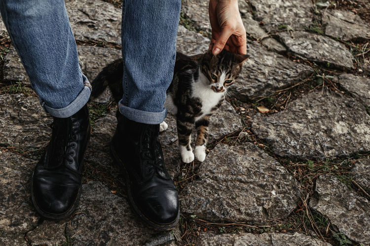 Low section of person with cat on street