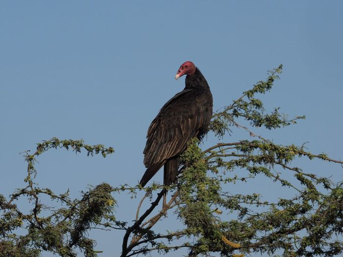Low angle view of vulture on tree