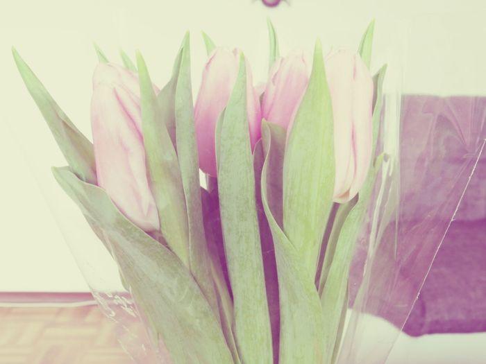 Blume Tulpen ♥