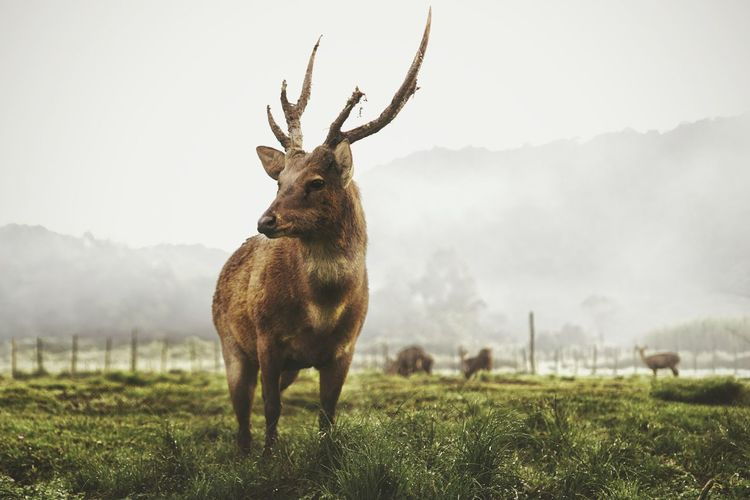 The great male Animal Wildlife Animal Grass Nature Outdoors Mammal Day Beauty In Nature Deer Deersighting Deer Horns Deer Sighting EyeEm Selects My Best Photo