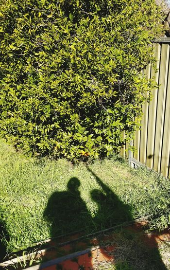 Reach for orange, orange, shadow Orange Sydney Shodow Photography Shadow Reaching For Orange