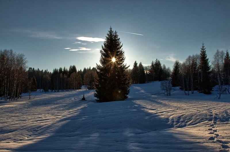 Czech Republic Modrava Sun Winter Beauty In Nature Cold Temperature Day Landscape Nature No People Outdoors Scenics Sky Snow Sun With A Tree Tranquil Scene Tranquility Tree Winter Šumava Šumava Bohemia Shades Of Winter EyeEmNewHere