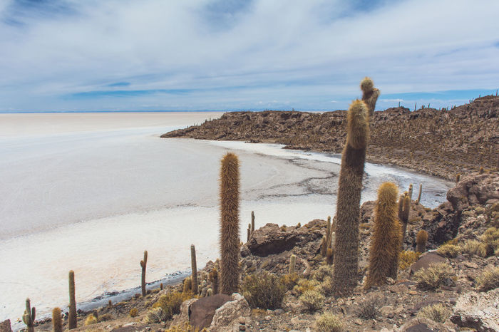 Isla Incahuasi - The Bolivian Salt Flats Beach Beauty In Nature Cacti Cactus Calm Cloud Cloud - Sky Coastal Feature Coastline Driftwood Geology Horizon Over Water Isla Incahuasi Nature Non-urban Scene Outdoors Remote Scenics Sea Shore Sky Solitude Tranquil Scene Tranquility Water