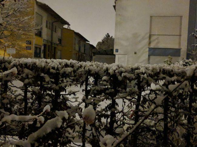 #winternacht in Trudering Wintertime Evening No People Munich Whitecity Winterscapes Flower Plant Growth Architecture Rural Scene Winter
