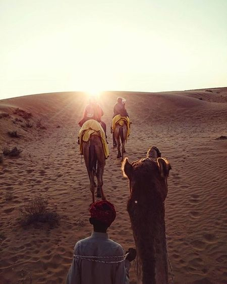 Chasing the Oasis. Oasis Safaricamp Jodhpur India Rajshtan Rarecation Camel Desert Instagram Instadaily Travelphotography Travel Travelers Candidsyndrome