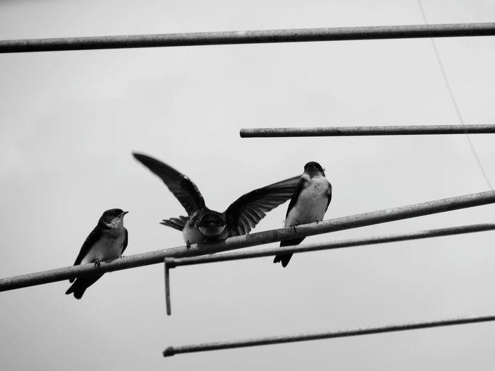 goodbye #birdphoto #blackandwhite #ByMe #photography #Nature