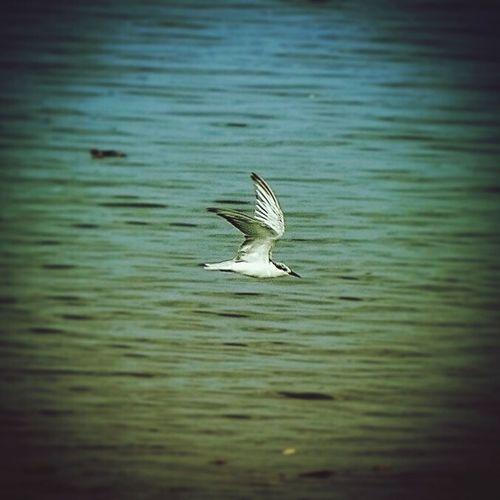 Onward Birdwatching