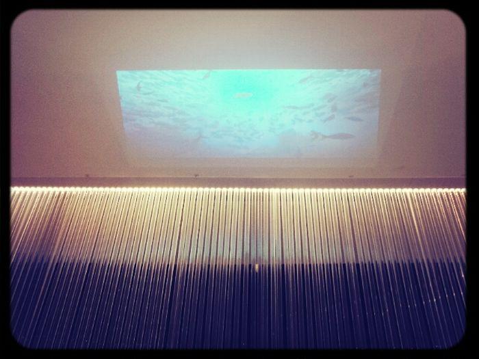 Aquariumsaussicht Auf Einem Massagestuhl Haare Waschen. Super!