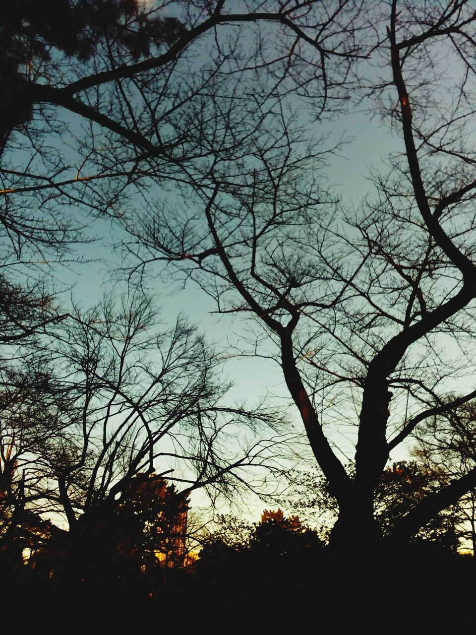 tree, bare tree, silhouette, branch, nature, tranquility, low angle view, no people, beauty in nature, sky, outdoors, scenics, day