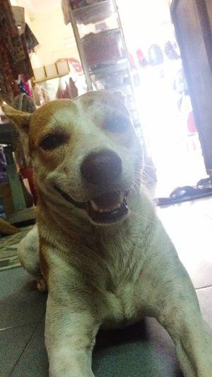 My neighborhood :D Smile ✌ Dogs Hometown