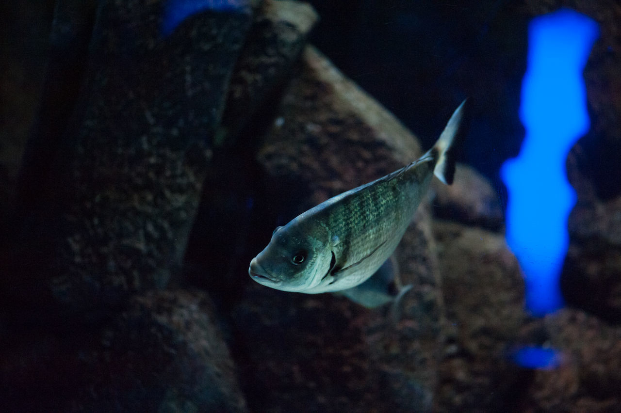 one animal, animal themes, animals in the wild, animal wildlife, underwater, nature, no people, swimming, close-up, night, aquarium, sea life, undersea, outdoors, slug, water, beauty in nature