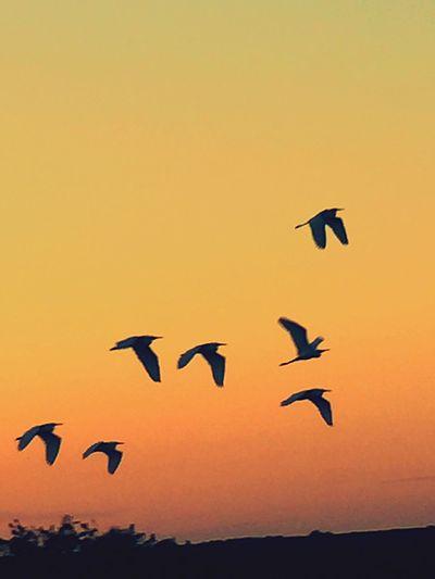 Heading to bed!! Bedtime For Birds Febuary: Showcase Chuylui Photography Showcase: February Nature Photography Nature_collection Enjoying Nature Farm Photos Sunsetphotographs @thefarmsunsets Countryside Life