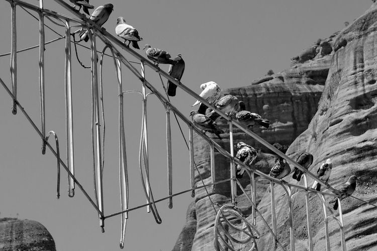 pigeons on an antenna Aerial Antenna Antenna - Aerial Black&white Blackandwhite Cable Day Electricity  Greece Kalampáka Low Angle View Outdoors Pigeons Power Line  Power Supply Sky