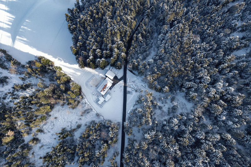 High Angle View Tree Winter Snow Dronephotography Birds Eye View Aerial Perspective Street Forest Aerial View Drone  Morning Light Long Shadows House Farm Clearing