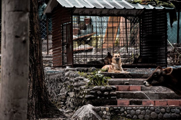 View of a dog in cage