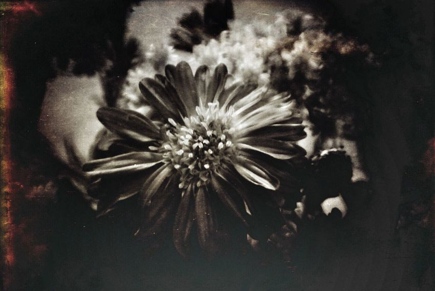 Meditation in Negative Arizona Blackandwhite Photography Flowers Mextures Holgalens Digitalphotography Sony A6000