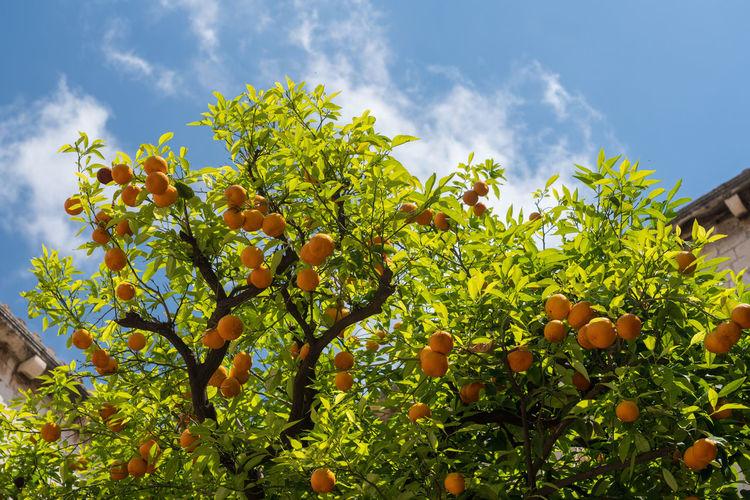 Oranges and