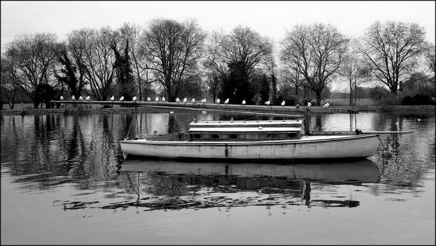 Birds The River Thames boat Monochrome Street Photography Paul Salmon