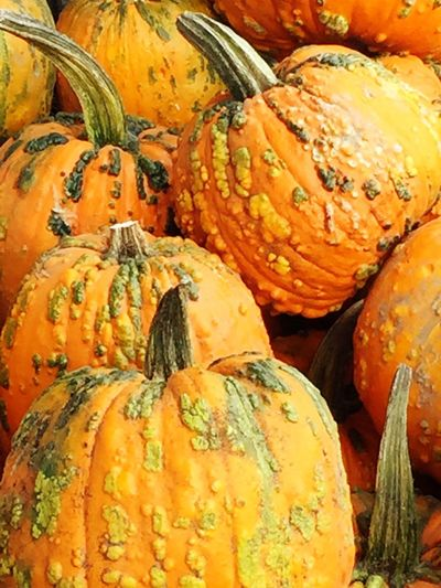 Close-up Large Group Of Objects Vibrant Color Eyeem Market Eye4photography  No Filter No Edit Just Reality Outdoors Pumpkins Pumpkinpatch Pumpkin!Pumpkin! The KNUCKLEHEADS PUMPKINS Have Arrived! Crazy World By The KNUCKLEHEADS Pumpkin Patch In Pacific NW
