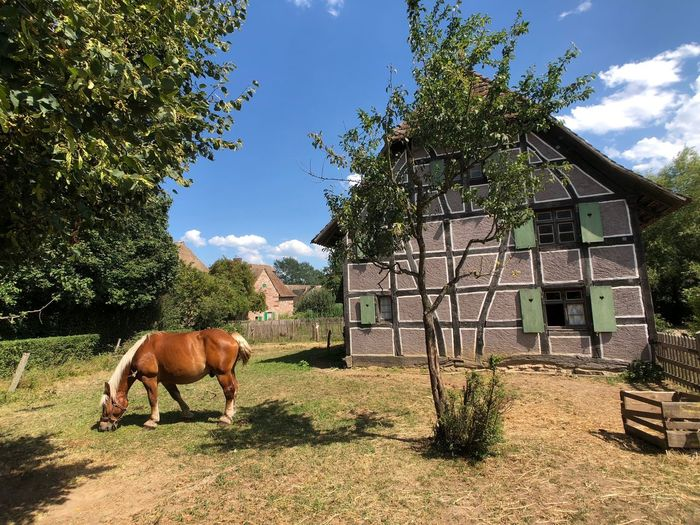 Alsacian building with horse Alsacian House Farm Horse Alsace Mammal Domestic Animals Domestic Animal Themes Pets Plant Animal One Animal Built Structure Nature Sky Field Architecture Animal Wildlife Building Exterior Sunlight Day
