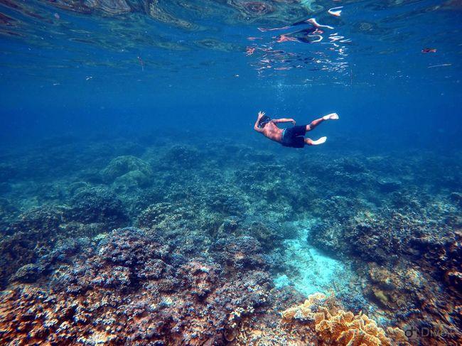 Underwater freedom, Philippines Malapascua Philippines Underwater Water Sea Swimming UnderSea Sport My Best Travel Photo