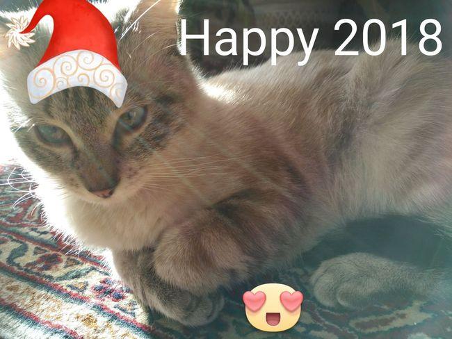 My Cat My Cat♥ No Filter Happy 2018 Domestic Cat Text Feline Pets Looking At Camera Portrait Mammal