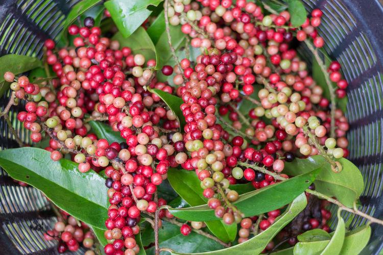 Thai Blueberry