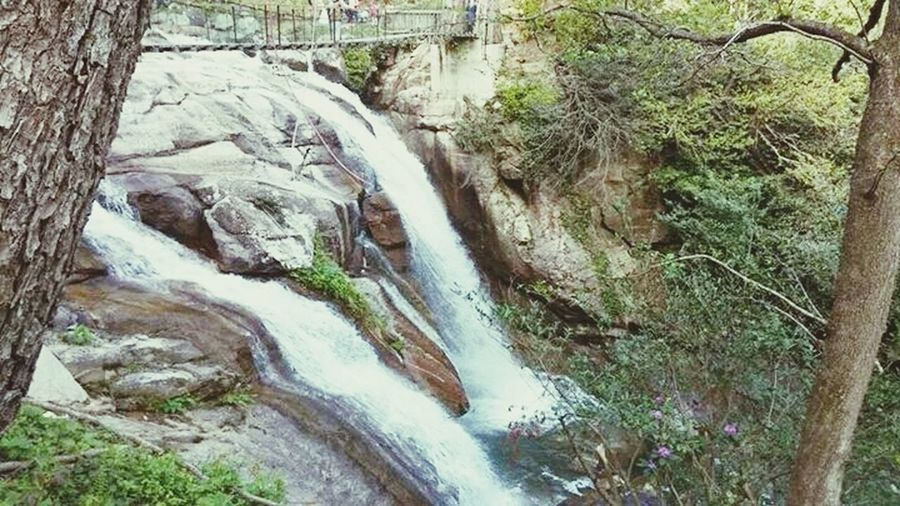 ın The Forrest Nature Waterfall