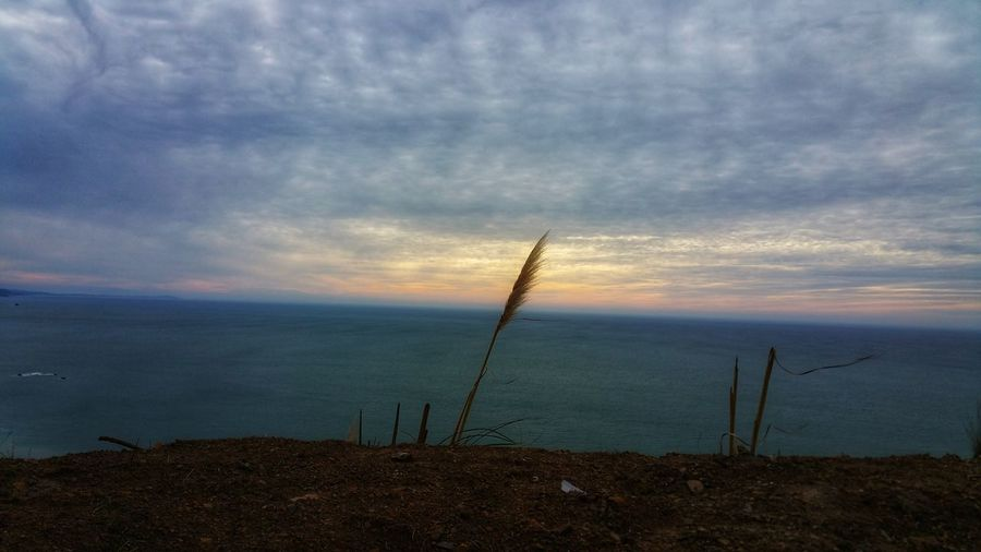 One Against the sky Dramatic Sky Water Distance Peace Zen Copy Space Rewilding Ocean Wild Coast Healthy Lifestyle Elements Cliffs One Solitary Solitude Single Reed Pink Pink Sky Moody Meditation Alone Determined Strong Statement Outdoor Clean Air Blue Dramatic Sky