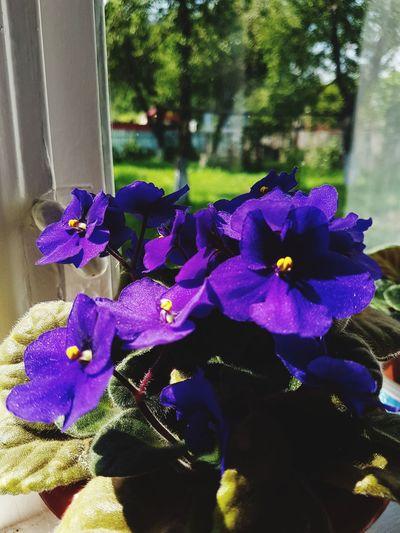 Flower Head Flower Purple Close-up Plant
