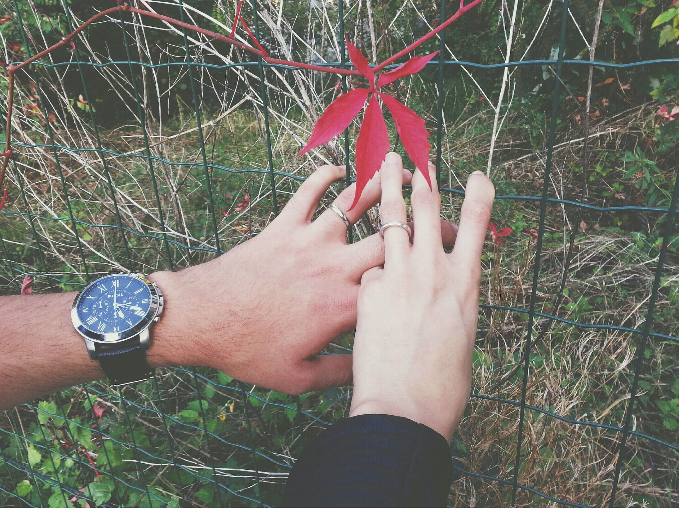 person, lifestyles, leisure activity, part of, touching, holding, personal perspective, human finger, tree, cropped, plant, growth, close-up, day, outdoors, focus on foreground