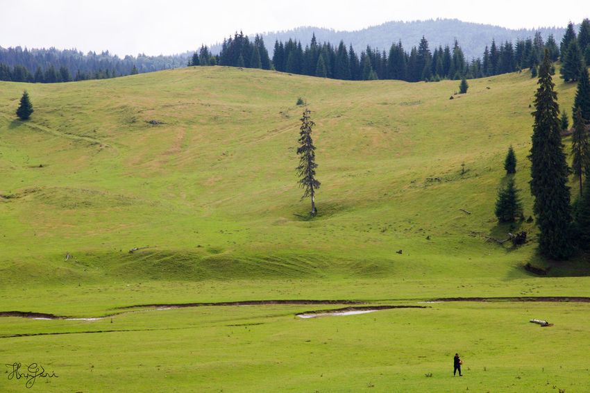 Padis, Transylvania Hiking Hungary Padiș Romania Transylvania Animal Themes Beauty In Nature Day Field Forest Grass Green Color Growth Hungarian Landscape Nature No People Outdoors Scenics Sky Tranquil Scene Tranquility Tree