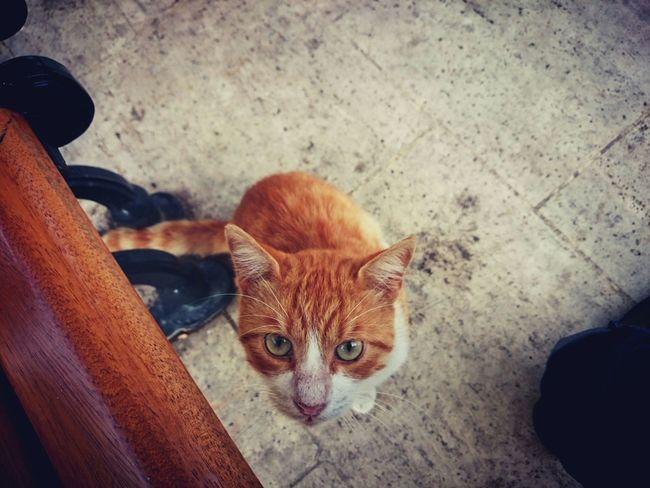 :-DCat Cat♡ Pretty Cat Hi! Nice Shot Lovely