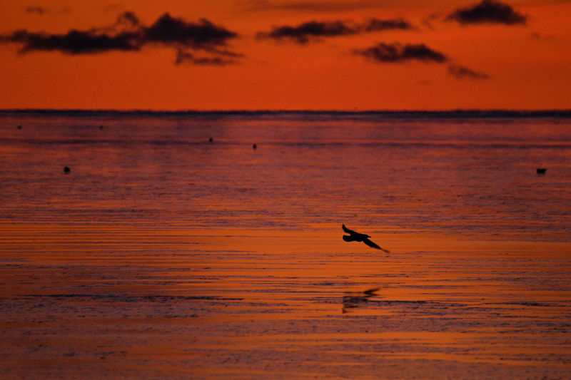 Silhouette bird flying over sea against orange sky