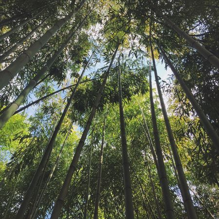 Bamboo бамбук Nature Green Abhaziya  абхазия Trees Vscocam OpenEdit