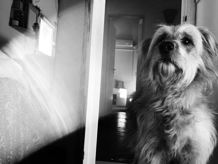 Animal Dog Puppy Tania Love Animal Photography EyeEm Animal Lover Animal Love