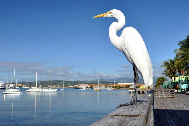 Snowy egret perching on railing by sea against sky