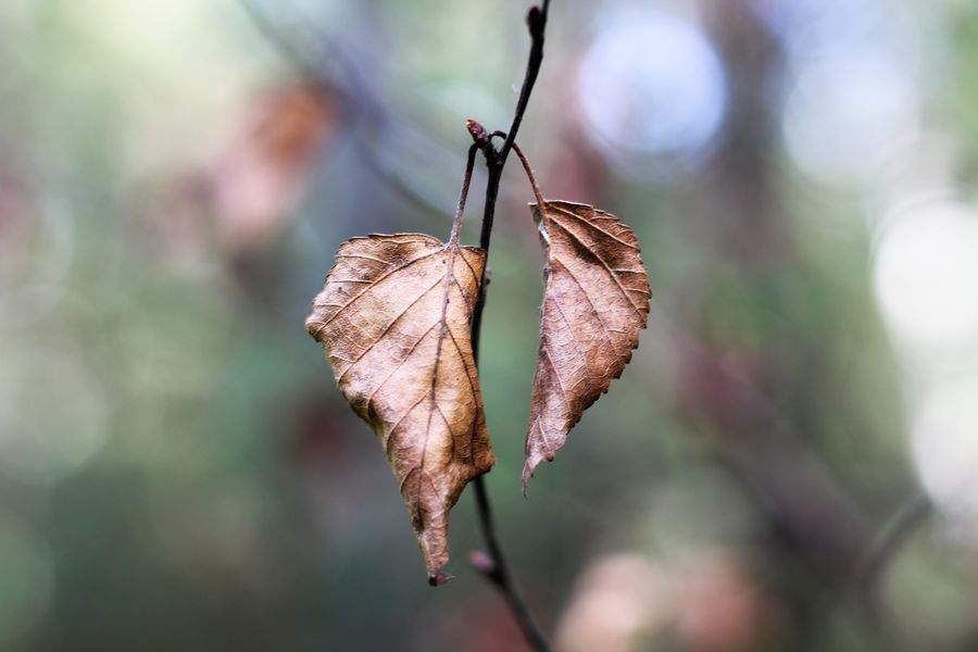 Autumn Autumn Collection Autumn colors Autumn Leaves Nature Autumn🍁🍁🍁 Beauty In Nature Beauty In Nature Branch Change Close-up Day Dry Focus On Foreground Fragility Leaf Leaves Natural Condition Nature No People Outdoors Plant Plant Part Twig Vulnerability
