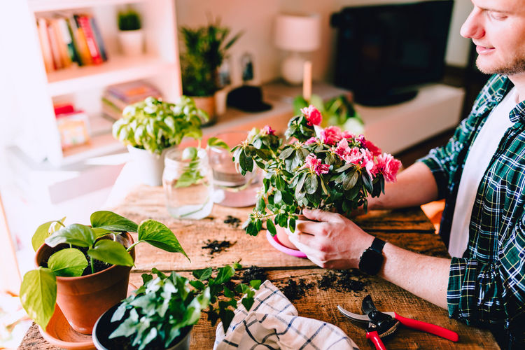 Young man while caring for pink azalea flowers on rustic wooden table with various accessories