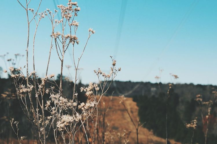Close-up of wilted plants on field against sky