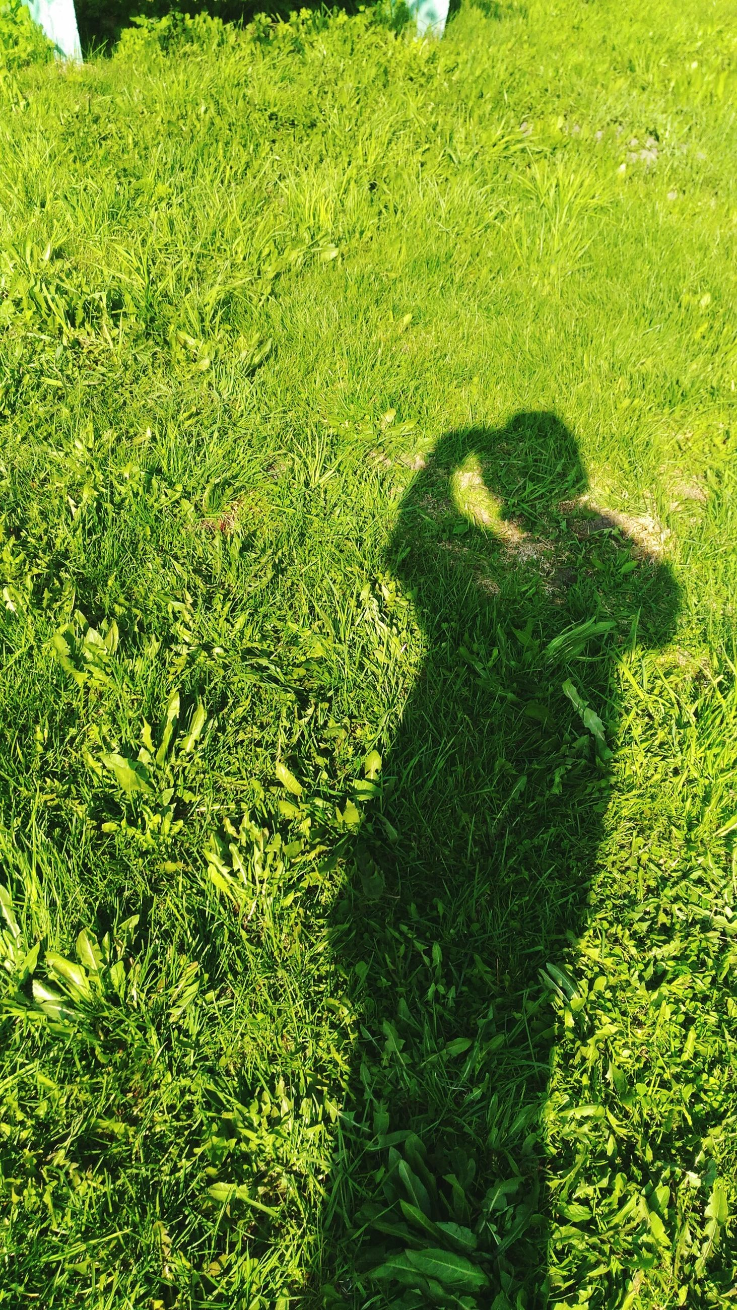 grass, green color, grassy, high angle view, field, shadow, lifestyles, growth, leisure activity, sunlight, men, lawn, plant, standing, day, outdoors, unrecognizable person, focus on shadow